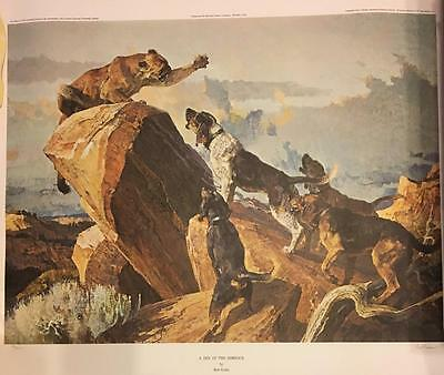 "COUGAR! SCARCE! signed & # print by Bob Kuhn ""A Din in the Rimrock"" Vintage 1976"