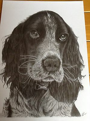 A4 Pencil Drawing Of Your Pet