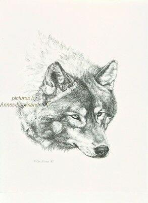 #363 WOLF portrait  * wildlife  art print *  pen & ink drawing by Jan Jellins