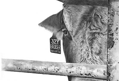 """Bruiser"" 14X20 Giclee Print by ROBYN COOK PENCIL ARTIST ~from PBR Bull Series~"