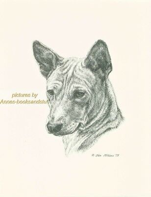 # 83 BASENJI portrait  dog art print * Pen and ink drawing * Jan Jellins