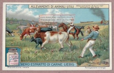 South American Cattle Breeding Ranch Gaucho Ropers1915 Trade Ad Card