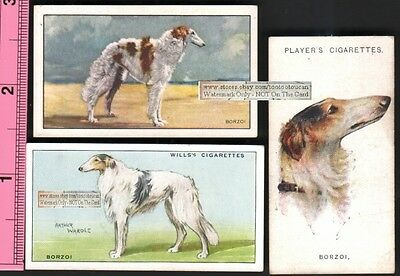 Borzoi Russian Wolfhound Dogs 3 Different 75+ Y/O Ad Trade Cards