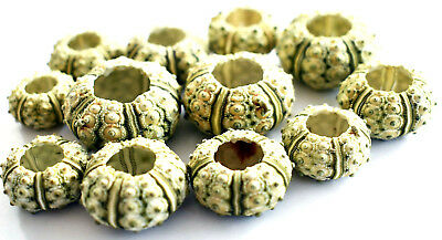 "12 Green Knobby Mini Sea Urchins (3/4""-1 1/4"") Beach Crafts Hobby Deco Nautical"