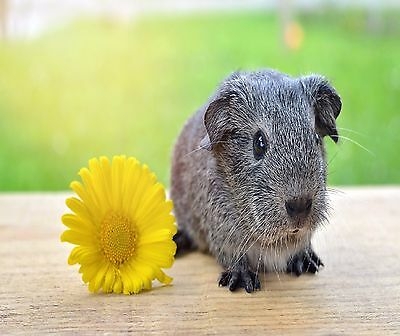 SILVER GUINEA PIG AND FLOWER COMPUTER MOUSE PAD 9 x 7