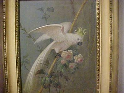 Alfonso T. Toran (1896-1965) Oil on Board COCKATOO Parrot Painting / Bird SIGNED
