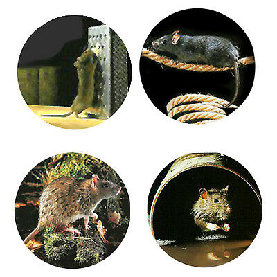 Rat Magnets: 4 Cool Rats for your Fridge or Collection-A Great Gift