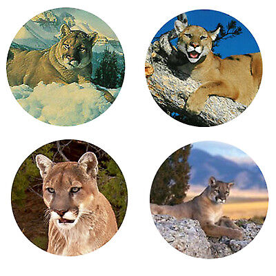 Mountain Lion Magnets: 4 Cool Mt. Lions 4 your Fridge or Collection-A Great Gift