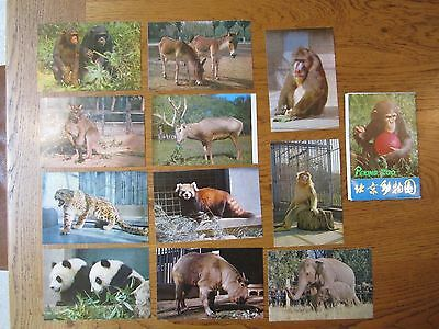 China, Peking zoo, 11 postcards plus envelope,