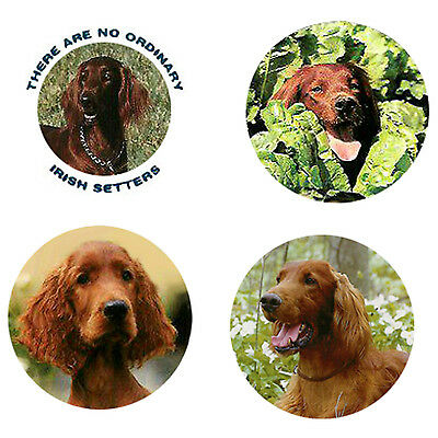 Irish Setter Magnets: 4 Irish Setters for your Fridge or Collection-A Great Gift