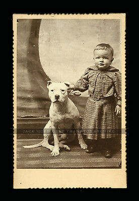 Fantastic Antique Photo - ID'd Little Boy in Dress with Hero Pit Bull Dog
