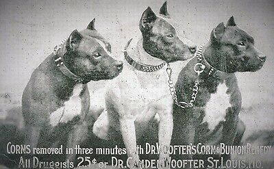 3 Pitbull Terrier Postcard 1914 Advertising for Dr, Woofter Corn & Bunion Remedy