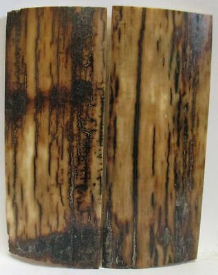FOSSIL BARK KNIFE SCALES 3-1/16 to 3-1/8 X 1-3/16 X 1/8 to 5/32