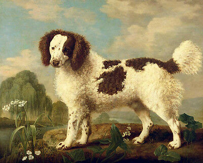 Art oil painting nice dog with Beautiful fur standing in landscape Hand painted