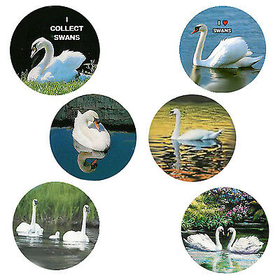 Swan  Magnets:   6 Gracious Swans for your Collection-A Great Gift