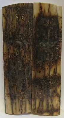 Fossil Bark Knife Scales  3-3/4 X 1 X 1/4