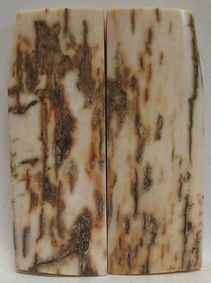FOSSIL BARK KNIFE SCALES 3-9/16 X 1-3/16 to 1-1/4 X 1/4