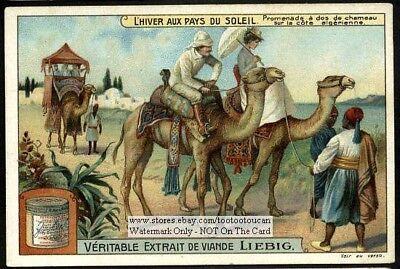 Camel Tour French Algeria Mediterranean Africa 1910 Trade Ad  Card