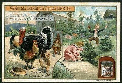 Chickens And Turkey Children Easter Egg Hunt 1905 Trade Ad  Card