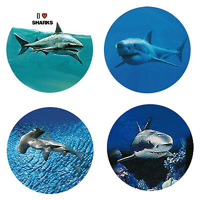 Shark Magnets: 4 Way-Cool Sharks for your Fridge or Collection-A Great Gift