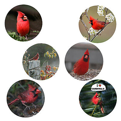 Cardinal Magnets:   6 Cool Cardinals for your Collection--A Great Gift