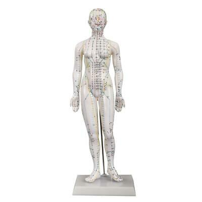66fit™ Acupuncture Female Model - 48cm - Pressure Point and Meridians