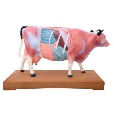 66fit™ Cattle Acupuncture Model - Animal Pressure Points Veterinary