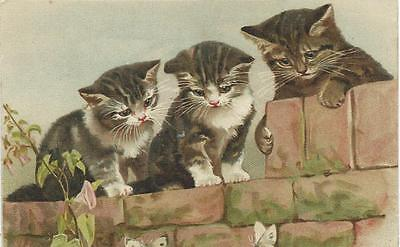 Helena Maguire ? (unsign)  Three Beautiful Cats  watch butterflies