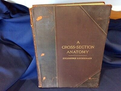 1911 1st Ed. A Cross Section Anatomy Atlas Medical Book Eycleshymer & Schoemaker