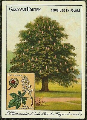 c1910 Chestnut Tree Cacao van Houten Cocoa Advertising Card in French
