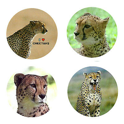 Cheetah Magnets: 4 Cool Cheetahs for your Fridge or Collection-A Great Gift