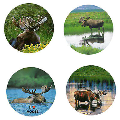 Moose Magnets:  4 Way-Cool Moose for your Fridge or Collection-A Great Gift