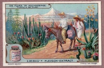 Scenic Andes Mountains Peru Plants South America  c1907 tRade Ad Card