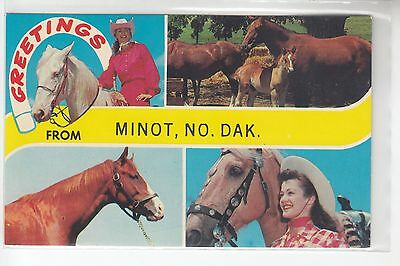 4 View Horse Greetings from Minot ND