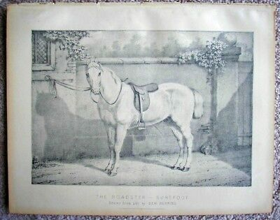"""LARGE c1890 Print of The Roadster  Horse """"Surefoot"""""""
