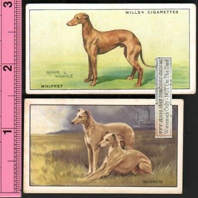 Whippet Dogs 2 Different 75+ Y/O Ad Trade Cards