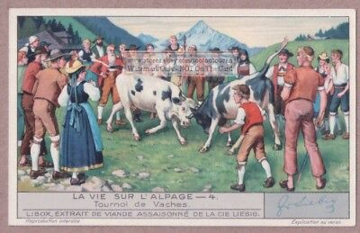 Swiss Fighting Cows In Battle In The Alps Tournoi De Vaches 1930s Trade Ad Card