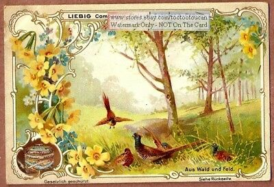 Wild Pheasants In The Forest Woods Avian Birds  c1900 Trade Ad Card