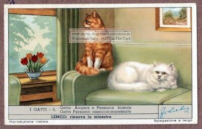 Angora Cat and Persian Persiano Gatto  c60  Y/O Trade Ad Card