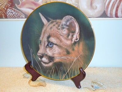 COUGAR CUB ~ Princeton Gallery Qua Lemond Cubs of Big Cats Collector Plate 1990