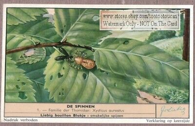Ground Crab Spiders Aranea cucurbitina c50 Y/O Vintage Trade Ad  Card
