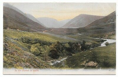 [5187] Inverness-shire Colored Postcard In The Forest Of Gaick