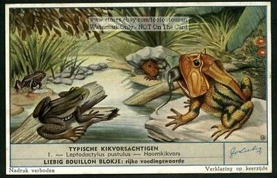Very Colorful Frogs Six c60  Y/O Vintage Trade Ad Cards