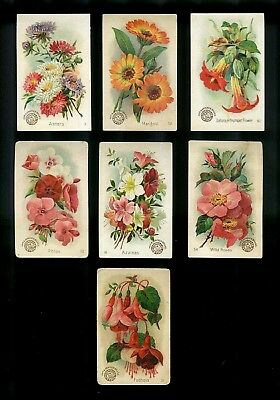 Lot 7 Arm & Hammer Victorian Trade Cards-Beautiful Flowers Series