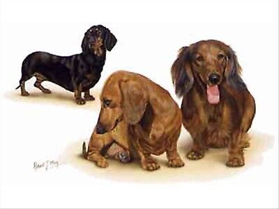 Dachshund Group Dog Robert May Art Greeting Card Set of 6