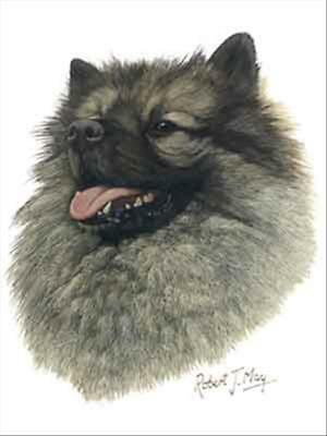 Keeshond Dog Robert May Art Greeting Card Set of 6