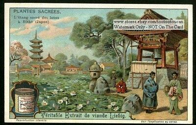 Worship Of The Sacred Lotus Blossom In Japan c1914 Trade Ad Card