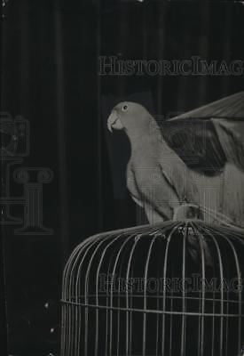 "1924 Press Photo ""Static"" the parrot."