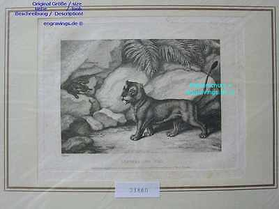 23860-Fabeln-Fables-SAMUEL HOWITT-Lioness and Fox-K