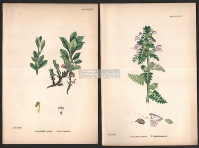 Lot of 4 1863 Sowerby Hand Colored Botanical Blooming Flowering Plant Prints 16